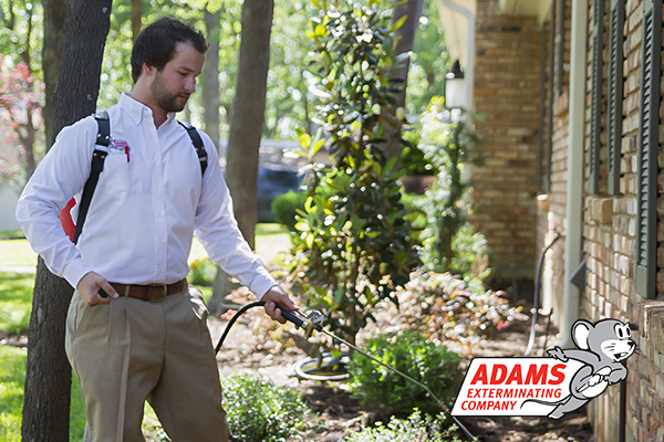 Adams Exterminating Co - Lewisville, TX