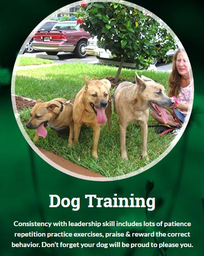 Karen Cares for Canines, LLC - Deerfield Beach, FL