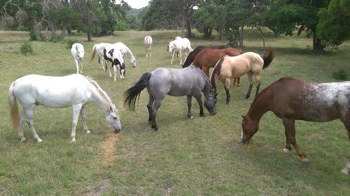 Cross G Ranch Trail Rides - Bandera, TX