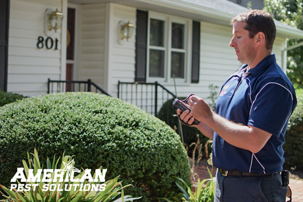 American Pest Solutions - Springfield, MA
