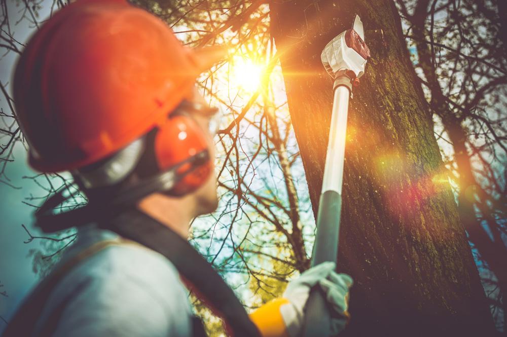 CARE Professional Tree Service, LLC - Powhatan, VA