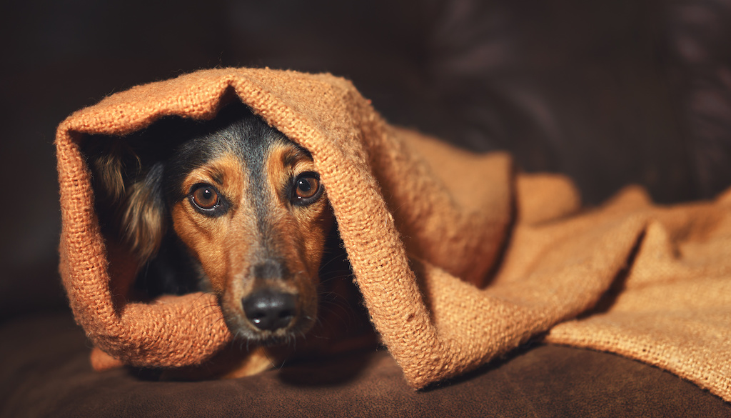 What Is A Natural Sedative For A Dog? - Rehome by Adopt-a