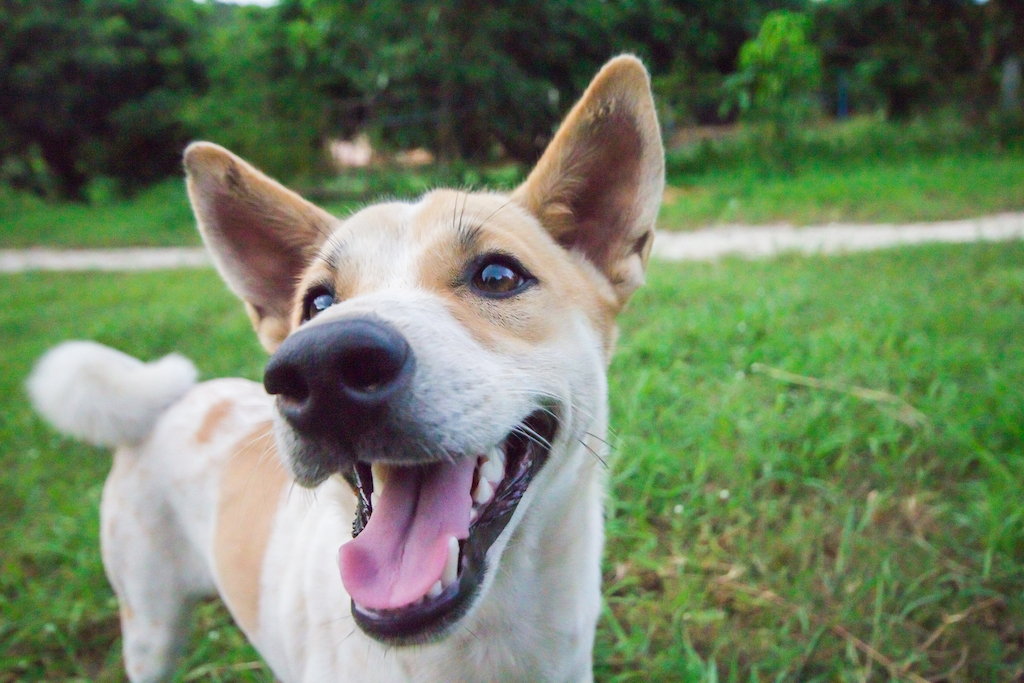 Can A Dog Be Put Down For Biting Someone? - Rehome by Adopt-a-Pet.com