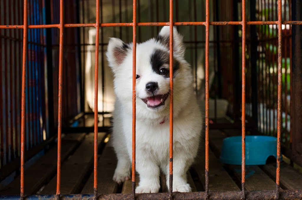 How Long Can I Crate My Dog? - Rehome by Adopt-a-Pet.com