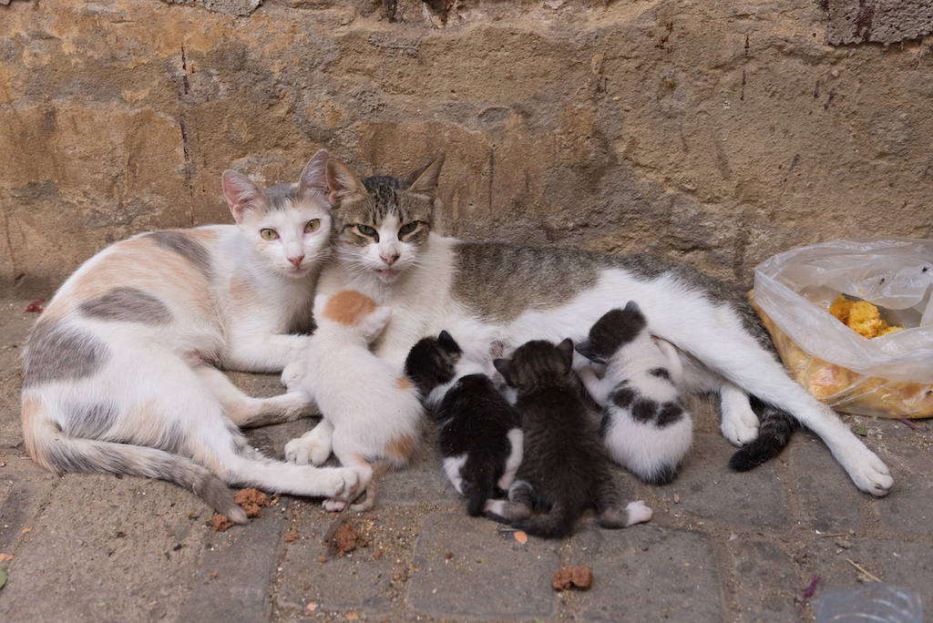 How Can I Tell If A Stray Cat Is Pregnant Rehome By Adopt A Pet Com