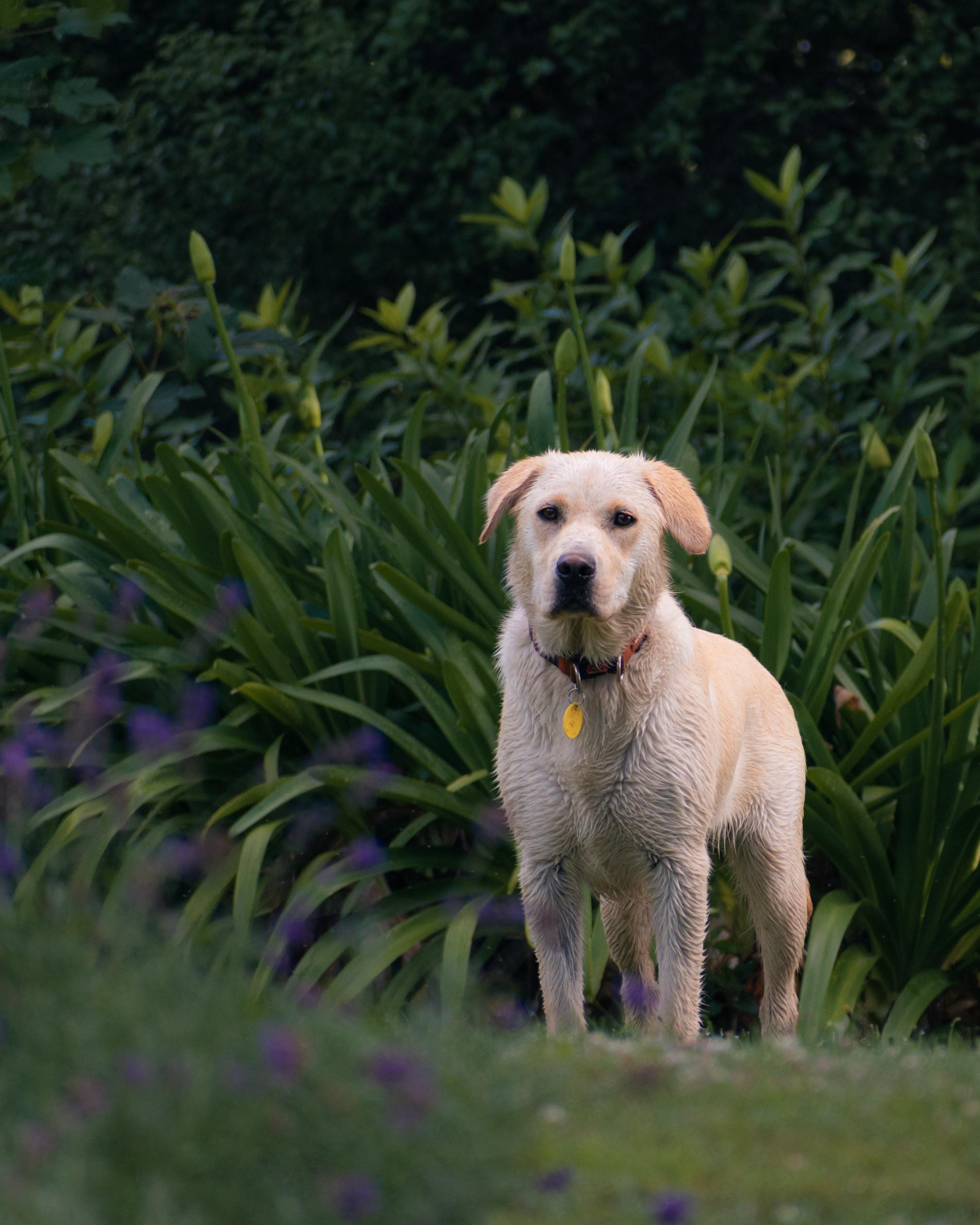How Do I Surrender My Dog Rehome By Adopt A Pet Com