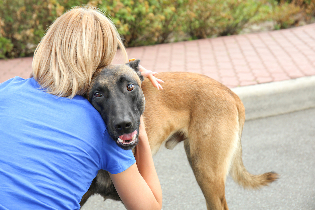 How Much Does It Cost To Surrender A Dog Rehome By Adopt A Pet Com