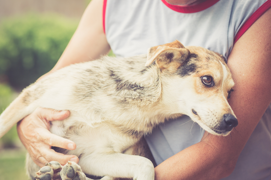 Can You Keep A Stray Dog You Found Rehome By Adopt A Pet Com