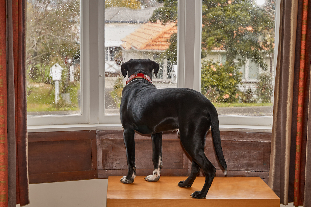 Can I Give My Dog Benadryl to Calm Him Down? - Rehome by ...