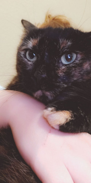 Rehoming Your Cat In Waco Tx Rehome By Adopt A Pet Com Amp Petco Foundation