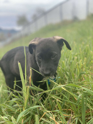 Rehoming Your Dog In Coos Bay Or Rehome By Adopt A Pet Com