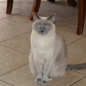 Rehoming Your Cat in AZ – Rehome by Adopt-a-Pet com & Petco Foundation