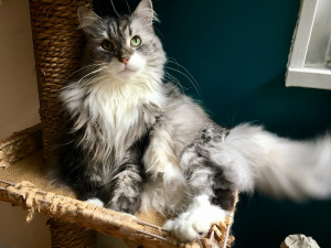 Rehoming Your Cat in NY – Rehome by Adopt-a-Pet com & Petco