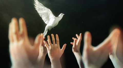 Hands raised in worship with lens flare and white Dove.