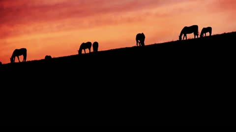 2477