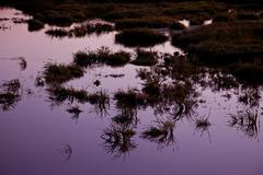 medziboz swamp and field during the sunset