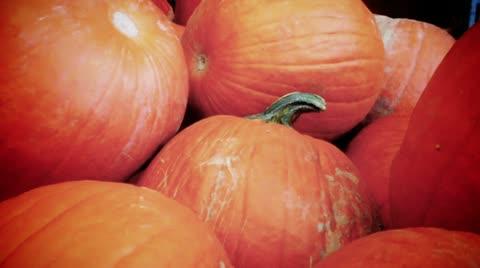 2790 A pumpkin background.