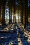 A low winter sun lights up the dark forest and casts shadows on the snow covered ground.