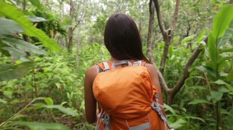 Hiking woman trekking in rainforest jungle. Rear back view of young female hiker walking on trek with backpack through dense rain forest nature on Maui, Hawaii, USA. Asian girl living active lifestyle