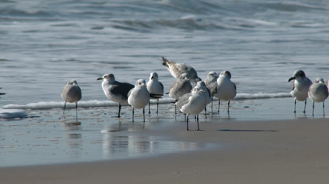 A 4K closeup shot of seagulls standing on a beach.