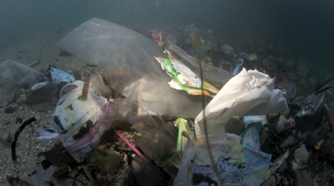 Plastic garbage and other debris floating in the tide mark underwater in Bunaken Island, Sulawesi