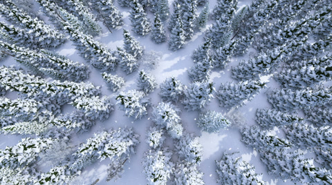 Winter forest, aerial view