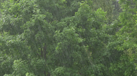 4407