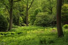landscape image of vibrant lush green forest woodland scene