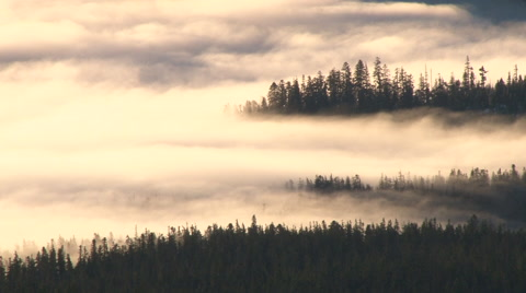 Sunrise time lapse in the Pacific Northwest with dense fog rolling through forest landscape. Also use for forest fire smoke effect,