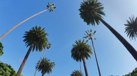 5542 Driving under palm trees in Beverly Hills, California.