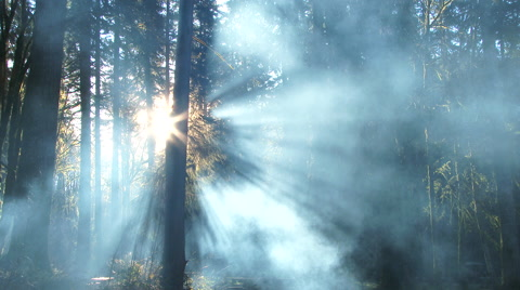 Beautiful fantasy style smoke forms in forest at sunrise in the Pacific Northwest, Oregon.