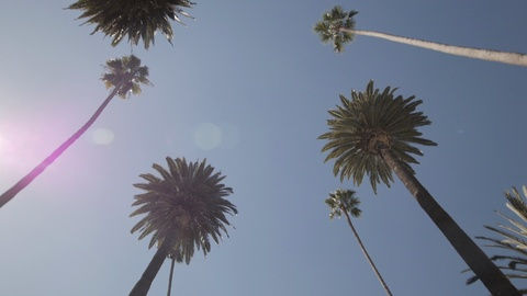 Driving through N Bedford Drive in Beverly Hills, California. Looking up at palm trees against a blue sky. Filmed in 60 fps.
