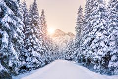 Winter forest in mountains at the sunrise. Footpath to mountain on snow covered spruce forest. Travel background. Vivid winter colors. Winter wonderland.