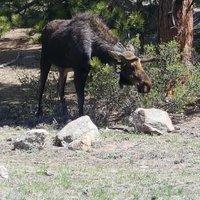 Rocky Mountain National Park resident, Denver.