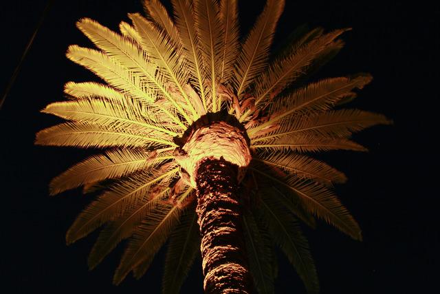 Gallery_night_photos20110205_0037.slide