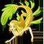 Leafy Seadragon Mermaid