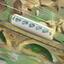 Pilatus Cogwheel Railway (CH)