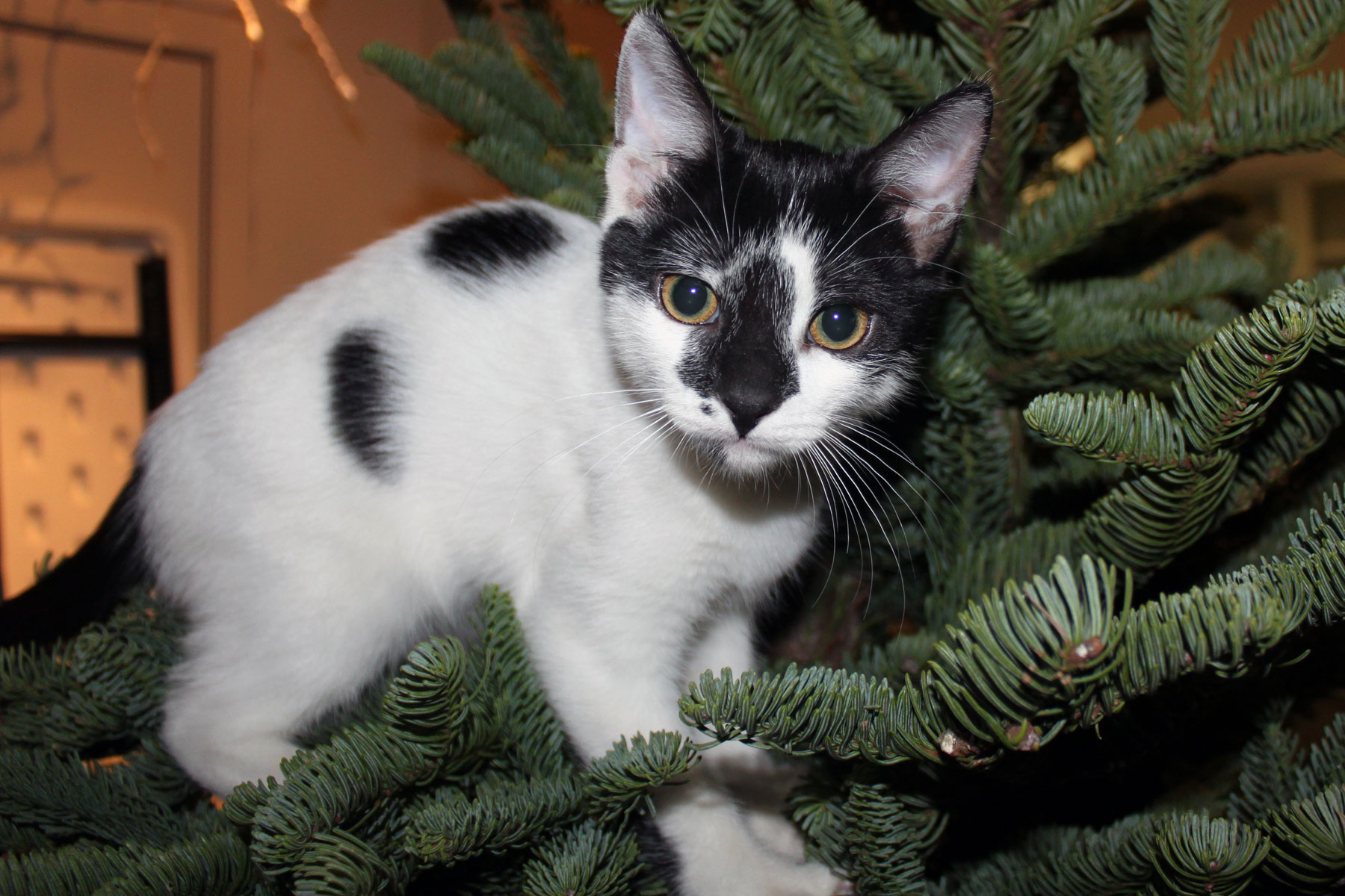 Merry Little Catsmas