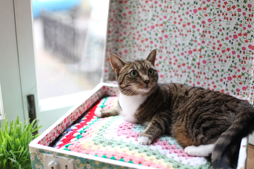 Fave Five: DIYs For Your Cat- Paint the Gown Red