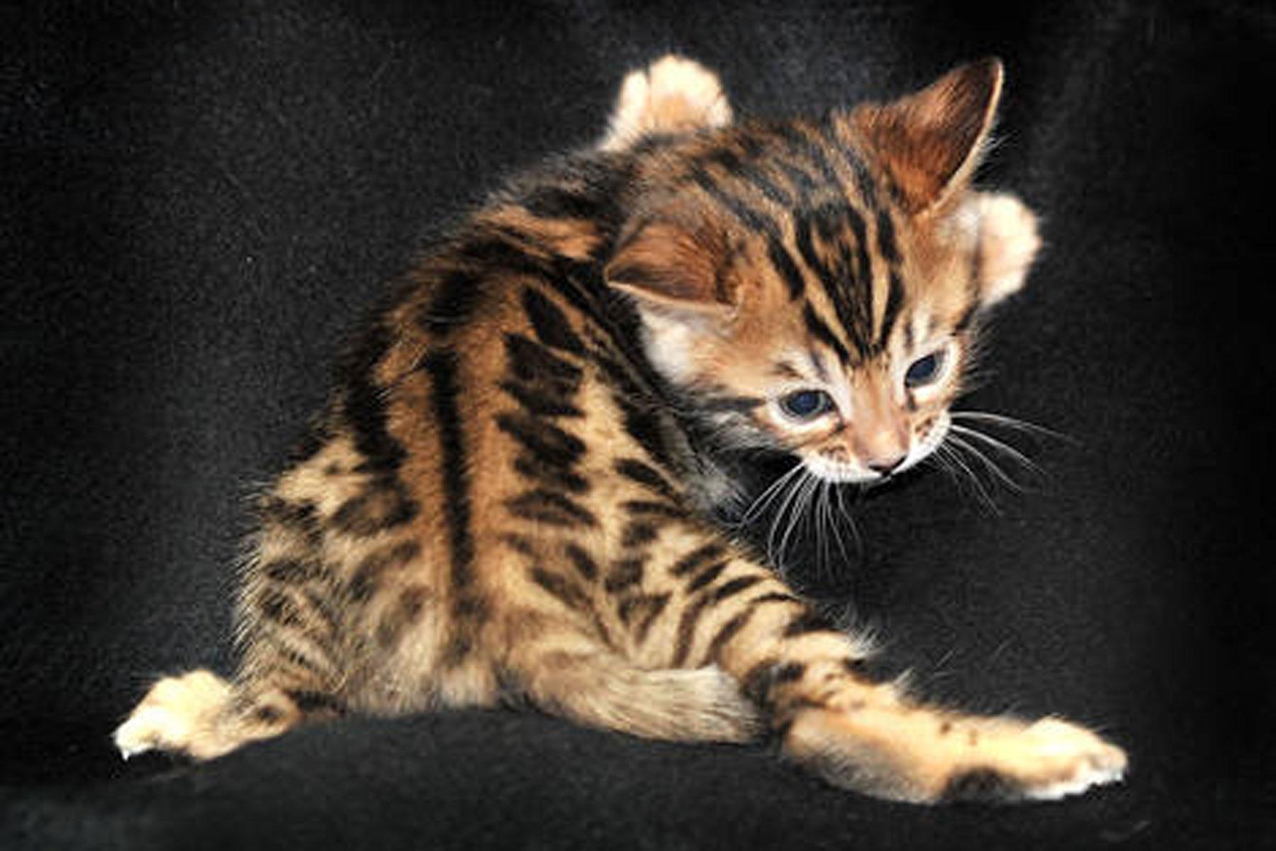 service cat training