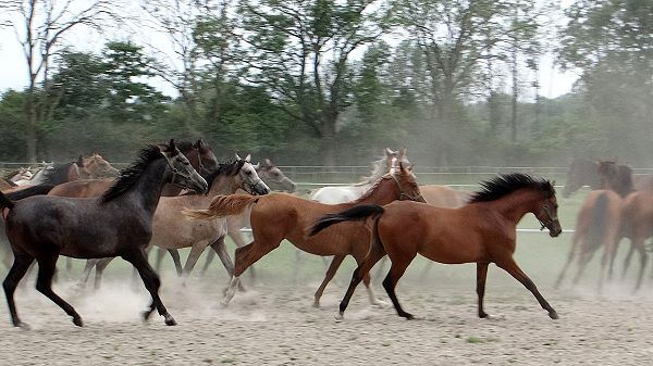 dust is result of horses movement