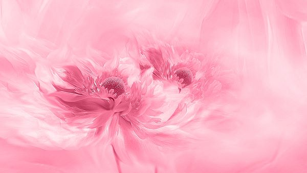 pink monochrome artwork of flowers conveying a peaceful emotion