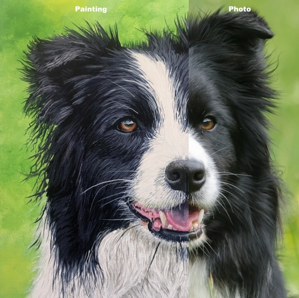 How to paint a realistic Border Collie dog painting course