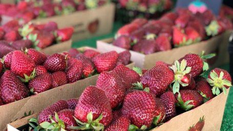 Culver city farmer's market