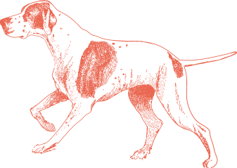 Dog miami