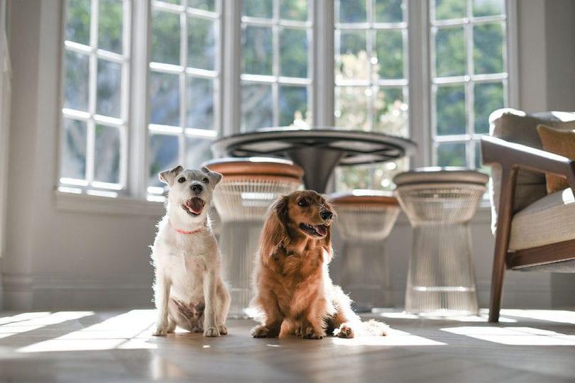 dogs-lobby-westwood
