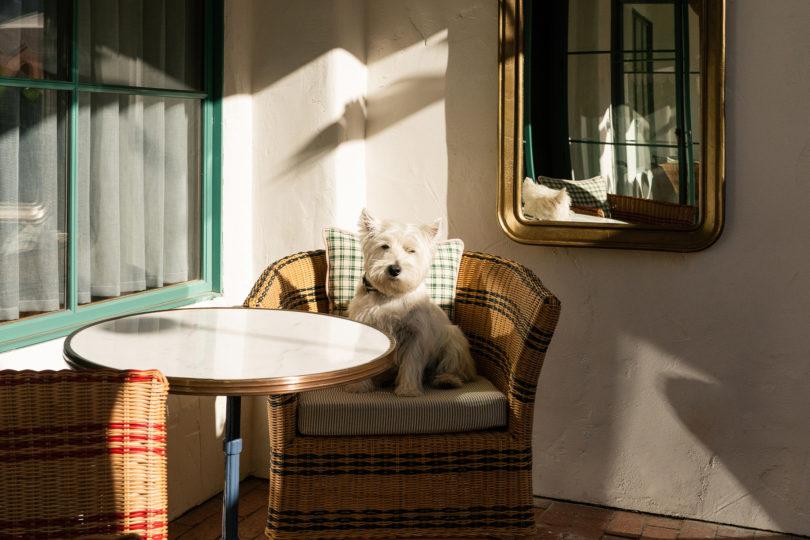 dog on balcony chair