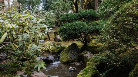 Portland Japanese Garden Photo By David Alvarado Travel Portland