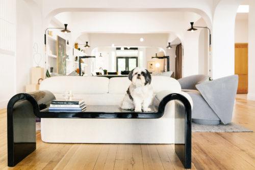 Cute dog in Hotel Grand Stark Lobby