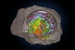 Ammonite-Canada-52cm-JB1172